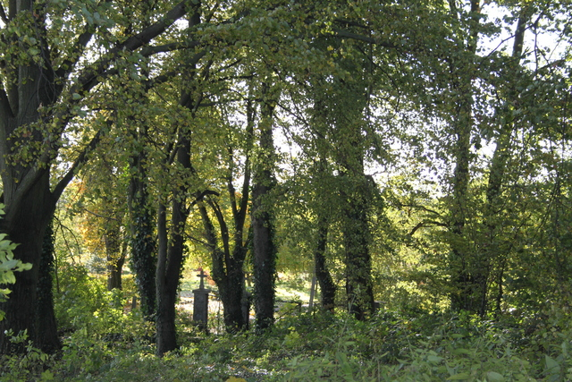 2 Pozostałości po cmentarzu niemieckim3.jpeg